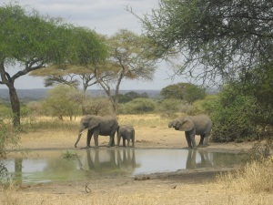 My impressions about Tanzania - A challenging adventure trip through breathtaking nature